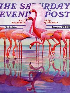 """""""Pink Flamingos,"""" Saturday Evening Post Cover, January 29, 1938 by Francis Lee Jaques"""