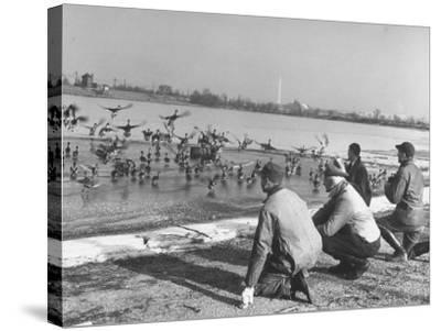 Bird Counters of the Audubon Society Observing Flock of Pintail and Mallard Ducks