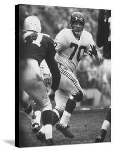 NY Giants Player Sam Huff by Francis Miller