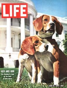 President Johnson's Beagles, June 19, 1964 by Francis Miller