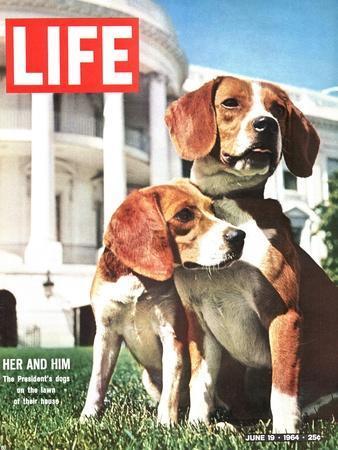 President Johnson's Beagles, June 19, 1964