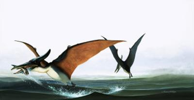 Pteranodon Catching a Fish