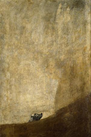 The Dog, 1820-23 by Francisco de Goya