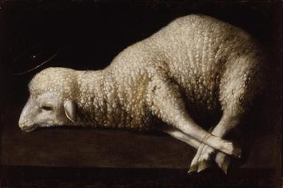 Agnus Dei, C.1635-40 by Francisco de Zurbaran