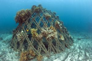 Corals Attached to Structure of Bio-Rock by Franco Banfi