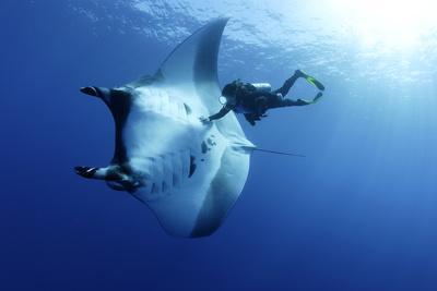 Scuba Diver And Manta Ray (Manta Birostris), San Benedicto, Revillagigedo (Socorro) Islands