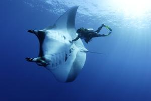 Scuba Diver And Manta Ray (Manta Birostris), San Benedicto, Revillagigedo (Socorro) Islands by Franco Banfi
