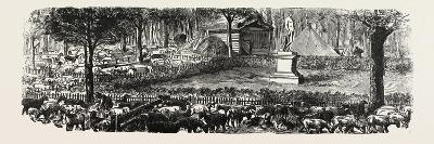 Franco-Prussian War: the Last in the Luxembourg Gardens Housed Sheep, France--Giclee Print