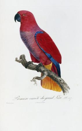 Histoire Naturelle Des Perroquets, circa 1801-1805