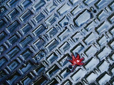 A Single Red Maple Leaf on a Steel Manhole Cover, Kyoto, Kinki, Japan,