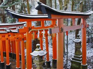 Orange-Red Gates (Tori) Lining Pathways of Fushimi-Inari-Taisha Shrine by Frank Carter