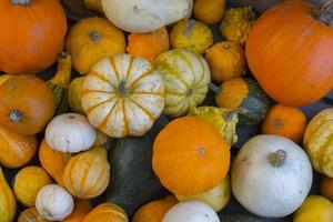 Assorted autumn vegetables, squashes and pumpkins, Derbyshire, England, United Kingdom, Europe by Frank Fell