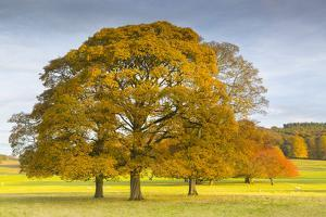 Autumnal trees in Chatsworth Park, Peak District National Park, Derbyshire, England, United Kingdom by Frank Fell