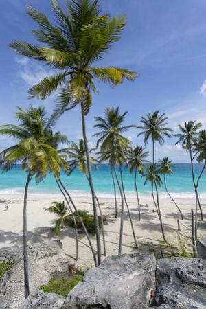 Bottom Bay, St. Philip, Barbados, West Indies, Caribbean, Central America by Frank Fell