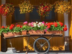 Flowers on Trolley, Arabba, Belluno Province, Trento, Italy, Europe by Frank Fell