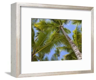 Palm Trees, Punta Cana, Dominican Republic, West Indies, Caribbean, Central America