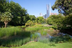Queen Victoria Gardens, Melbourne, Victoria, Australia, Pacific by Frank Fell