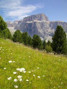Sella Pass and Daisies, Trento and Bolzano Provinces, Italian Dolomites, Italy, Europe by Frank Fell
