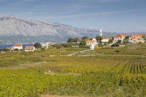 View of town and vineyard, Lumbarda, Korcula, Dubrovnik-Neretva County, Dalmatia, Croatia, Europe by Frank Fell