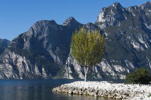 Lake Garda, Torbole, Beach, Trentino, Italy, Mountain Lake, Holiday Region, Relaxing, Vacation by Frank Fleischmann