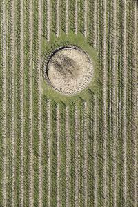 Nature, Landscape, Borgo, Val Sulgana, Aerial Shot, Meadow, Fields, Way, Wine-Growing, Summer by Frank Fleischmann