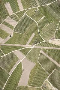 Nature, Landscape, Val Sulgana, Railway, Aerial Shot, Meadow, Fields, Way, Wine-Growing, Summer by Frank Fleischmann