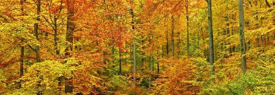frank-krahmer-beech-forest-in-autumn-kassel-germany