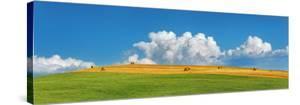 Corn field harvested, Tuscany, Italy by Frank Krahmer