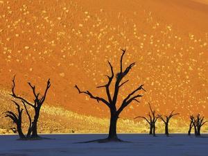 Dead Trees in Dead Vlei by Frank Krahmer