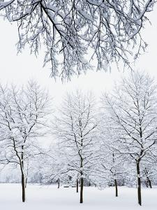 Englischer Garten's Snow Covered Trees by Frank Krahmer