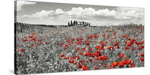 Farm house with cypresses and poppies, Tuscany, Italy by Frank Krahmer