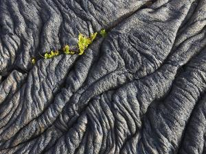 Ferns growing from a crack in a lava flow by Frank Krahmer