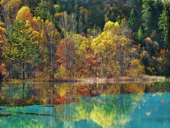 frank-krahmer-forest-in-autumn-colours-sichuan-china