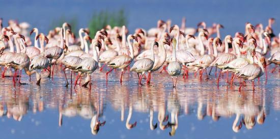 frank-krahmer-lesser-flamingo-lake-nakuru-kenya