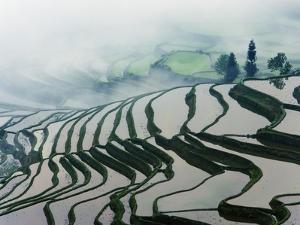 Morning Fog Above Rice Fields by Frank Krahmer
