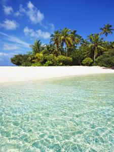 Palm Trees and Beach on South Male Atoll in the Maldives by Frank Krahmer