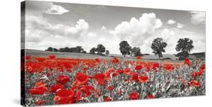 Poppies and vicias in meadow, Mecklenburg Lake District, Germany by Frank Krahmer