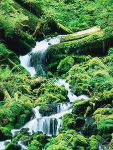 Stream and moss, Olympic National Park, USA by Frank Krahmer