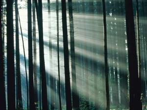 Sunbeams streaming through forest by Frank Krahmer