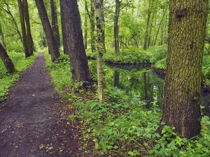 Trail in forest next to irrigation channel by Frank Krahmer