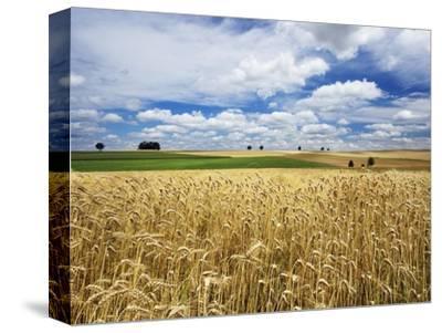 Wheat Field Under Cloud Filled Sky