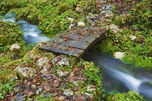Wooden Footbridge over Mountain Stream, Triglav National Park, Julian Alps, Slovenia by Frank Krahmer