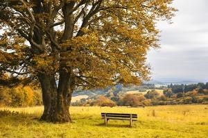 Beech Tree in Atumn by Frank Lukasseck
