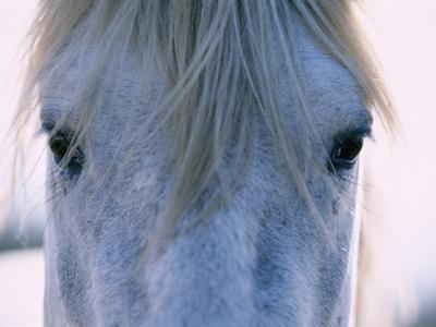 Camargue Horse by Frank Lukasseck