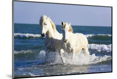 Camargue Horses in Surf by Frank Lukasseck