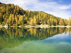 Larch Trees on Lake Seebensee by Frank Lukasseck