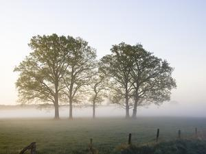 Oak Trees in a Pasture by Frank Lukasseck