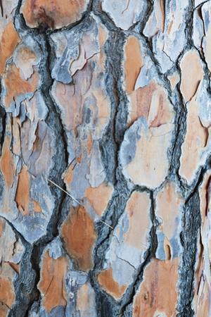 Pine Tree Bark by Frank Lukasseck