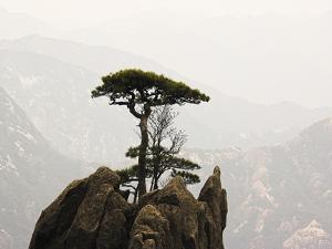 Pine Tree on Mountaintop by Frank Lukasseck