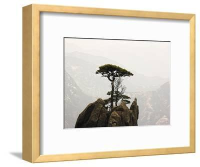 Pine Tree on Mountaintop